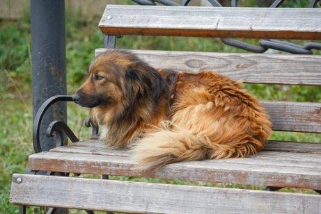 Traurige Realität: ausgesetzte Straßenhunde