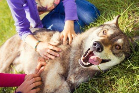 Was fühlt dein Hund, wenn er dich sieht?