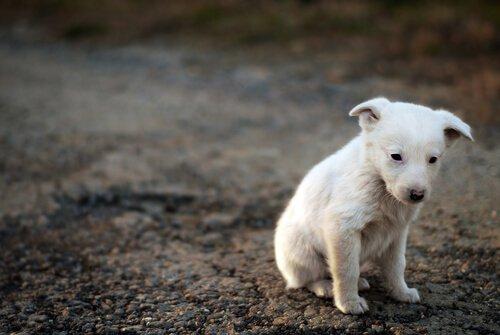 Wie kann ich einen Straßenhund adoptieren?