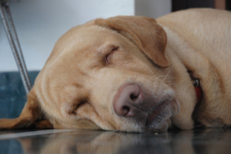 Wie schläft dein Hund? Schlafpositionen können einiges verraten ...
