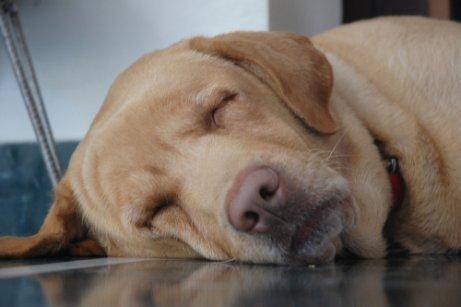 Wie schläft dein Hund? Schlafpositionen können einiges verraten