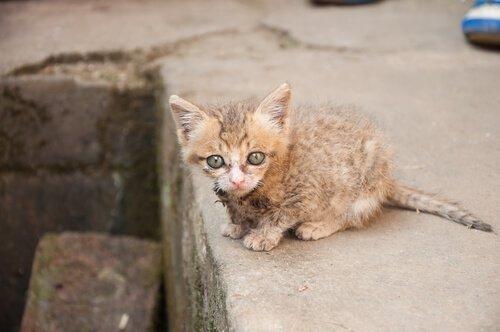 adoptiere eine Katze