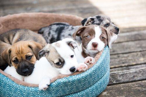 adoptiere einen Hund