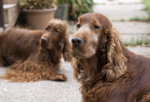 Leben mit einem älteren Hund