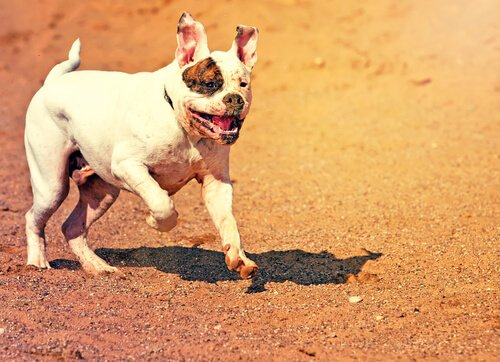 Von diesem Hund möchte niemand gebissen werden