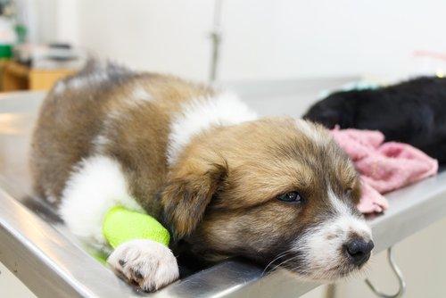 Auch Hunde leiden an Krankheiten