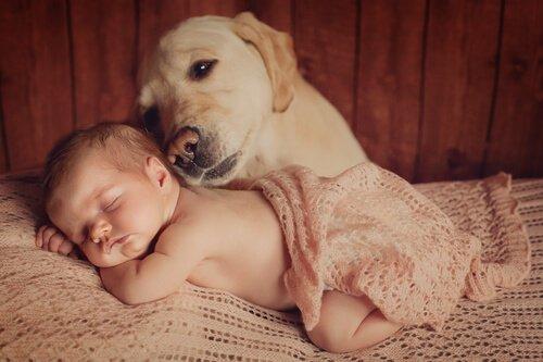Baby und Hund: Tipps für eine gute Freundschaft