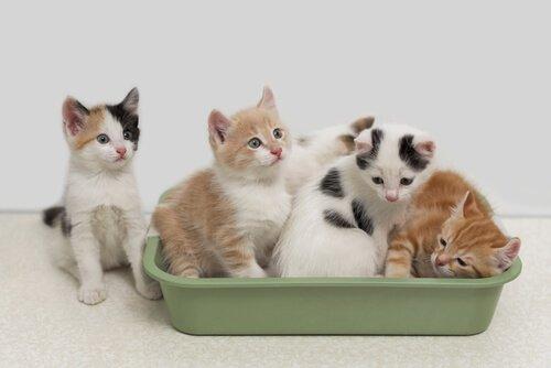 Biologisch abbaubare Katzenstreu