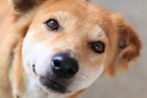Wie du den Tränensack deines Hundes aufhellen kannst