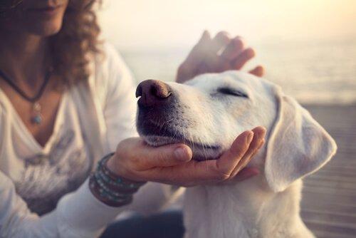 Der Hund lässt sich verwöhnen
