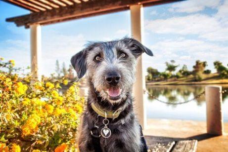 die Stimmung deines Haustieres - glücklicher Hund