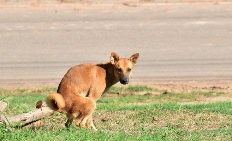 DNA-Datenbank für Hunde in Madrid