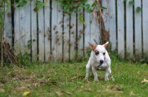 DNA-Datenbank für Hunde