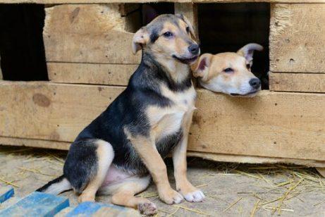 Ersthund und Zweithund