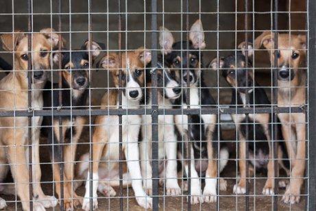 Fördert der Kauf von Hunden Tiermisshandlung?