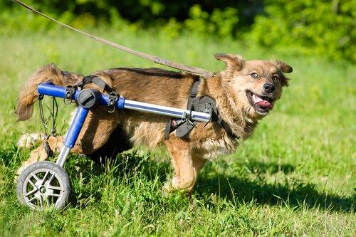 Verantwortung für behinderten Hund übernehmen