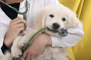Hausapotheke für Hunde für den Notfall