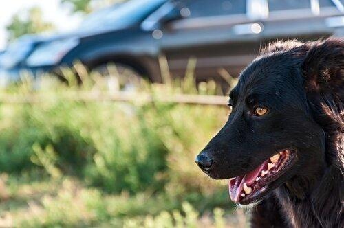 Reisekrankheit bei Hunden