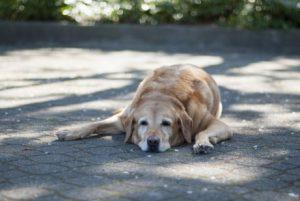 Hund liegt halb in der Sonne, halb im Schatten