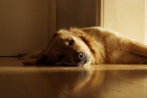 Hund liegt in der Sonne