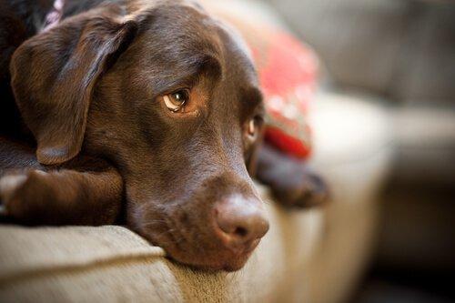 Dieser Hund vermisste sein Herrchen und tat dies, damit er zurückkam