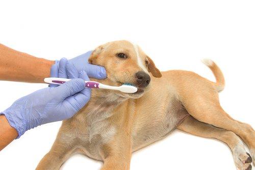 Hund will seine Zähne nicht putzen lassen