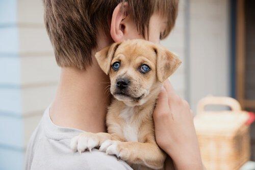 Signalhund mit Kind