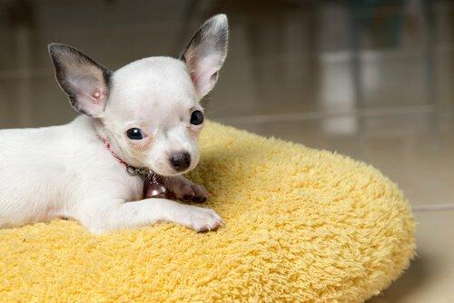 Hundeerziehung von klein auf