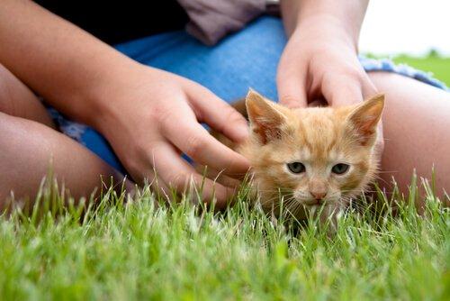 Mensch-Katzen-Freundschaft und seelische Gesundheit
