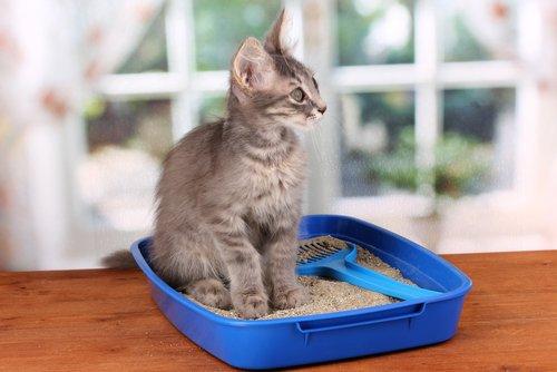 Katze im Katzenstreu