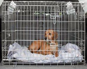 Kauf von Hund im Käfig