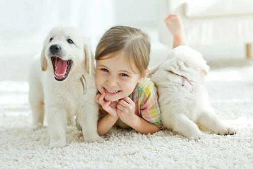 Kind mit Hunden kann ihren Tod nicht verstehen
