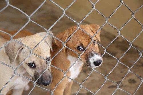 kleine Hunde in illegaler Zuchtanstalt