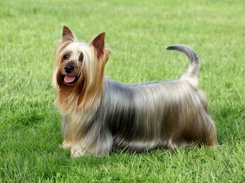 Kleine Hunde mit großem Charakter