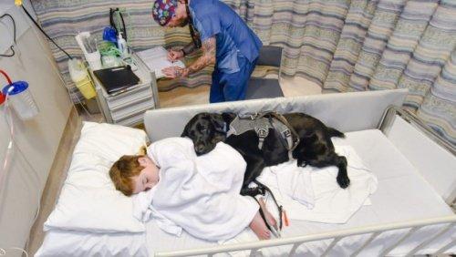 Hund im Krankenhaus mit autistischem Besitzer