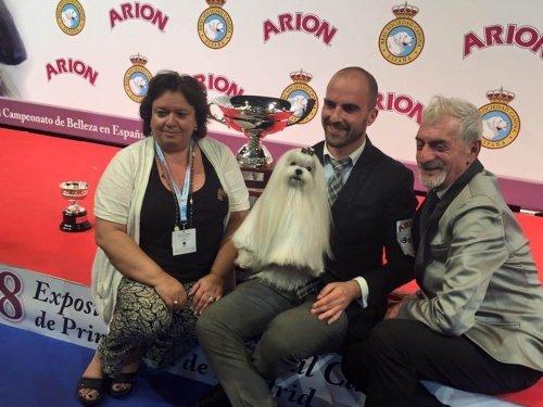 Ein Malteser gewinnt den Wettbewerb um den besten Hund Spaniens