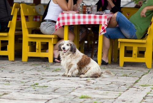 Nicht ohne dich! Welche Pläne kannst du mit deinem Hund machen?