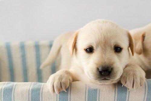 Weißt du, warum die Prägungsphase wichtig im Hundeleben ist?