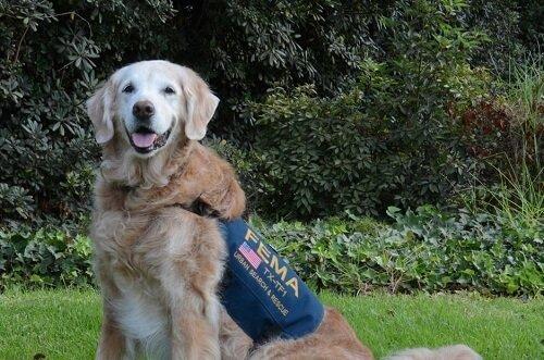 Wir verabschieden uns vom letzten Rettungshund vom 9/11
