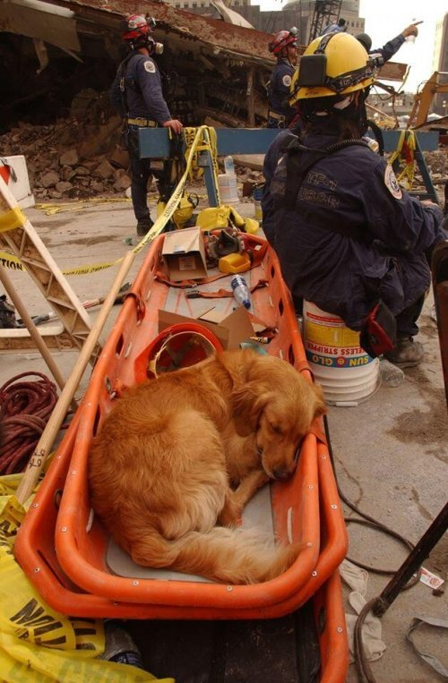 Rettungshund legt ein Päuschen ein