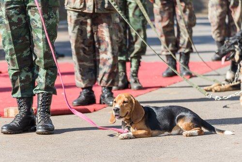 Rettungshunde im Einsatz