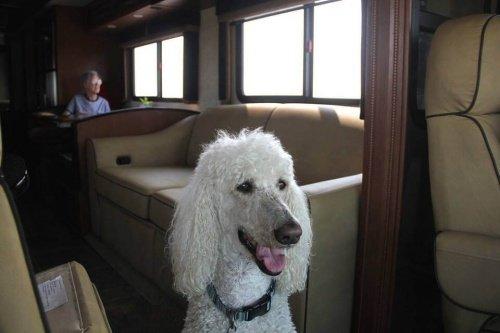 90-jährige Frau reist mit ihrem Hund durch die USA