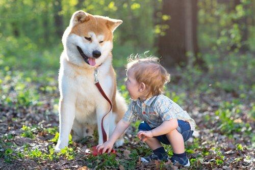 Wie ein Signalhund das Leben eines tauben Kindes verändert