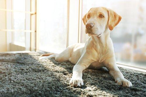 Wie ändert sich der Charakter nach der Sterilisation deines Hundes