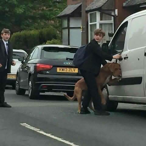 Bradley, der Teenager, der einen Hund davor rettete, sich an seiner eigenen Leine zu erhängen