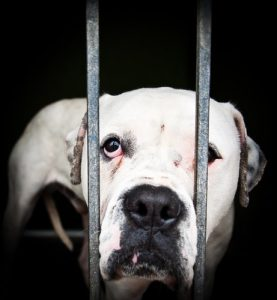 Tiermisshandlung bei Hund hinter Gitter