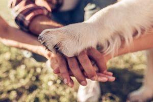 5 Wege, deinem Hund zu zeigen, dass du ihn liebst