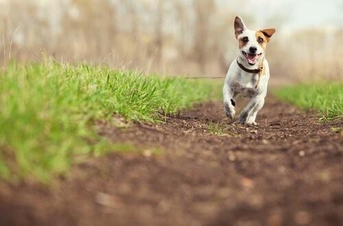 5 Wege, deinem Hund zu zeigen, dass du ihn liebst - Hund im Freien