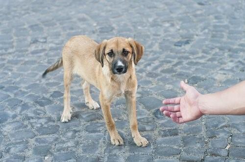 Das Leben eines Hundes zu retten