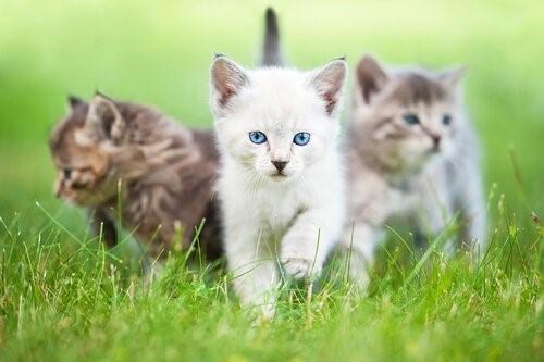 Deine Katze glücklich zu machen - kleine Kätzchen